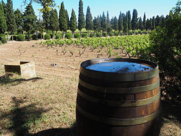 Imponerende variation i efterårets spanske vine