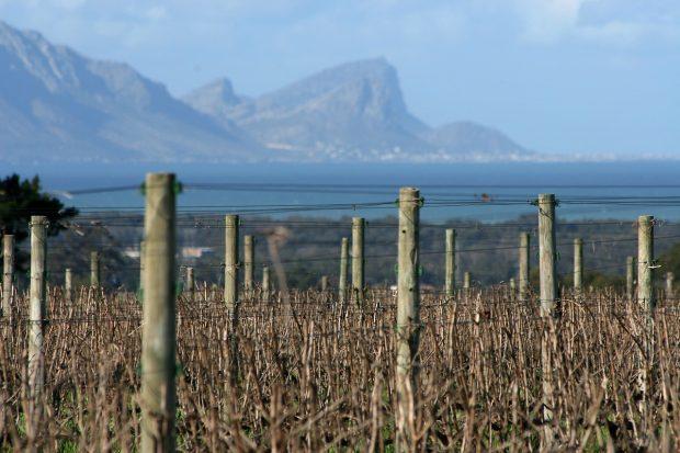 Efterårsopdagelser af oversøiske vine