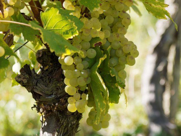 Flaskehalsen anbefaler – Rødvin fra USA