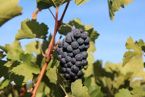 Drikkeklar Rioja på højt niveau