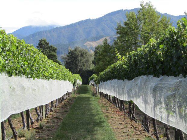 Flaskehalsen anbefaler – rødvin fra New Zealand